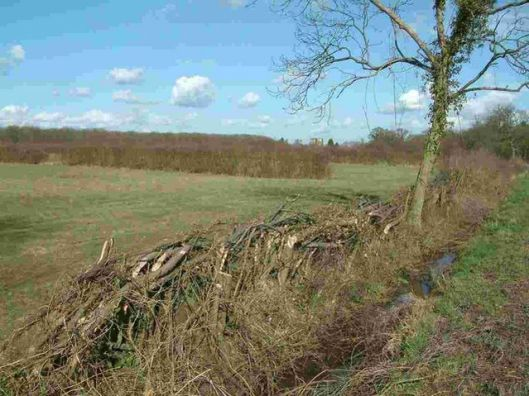 639px-ancient_hedgerow_near_monks_wood_-_geograph-org-uk_-_411184.jpg