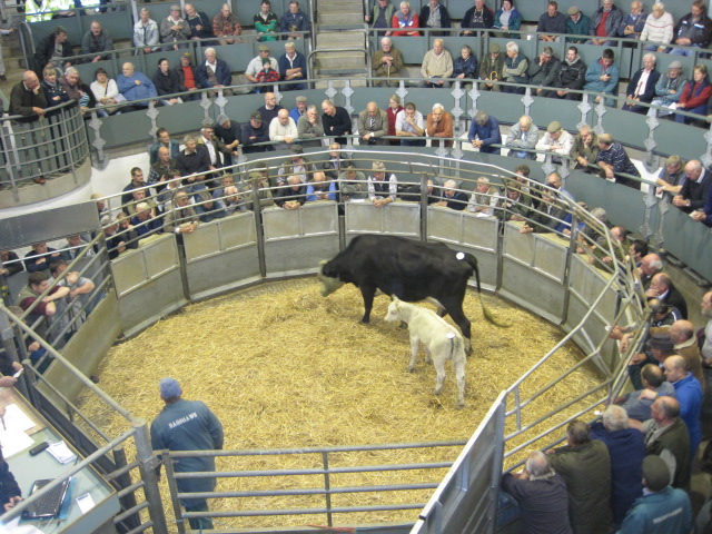 Cattle Market The Year Of Living Englishly