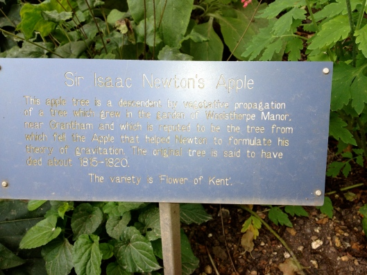 Speaking of apples, here's the offshoot of the source of Sir Isaac Newton's. . . .