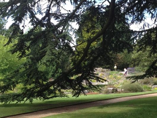 a vista at the Botanical Garden