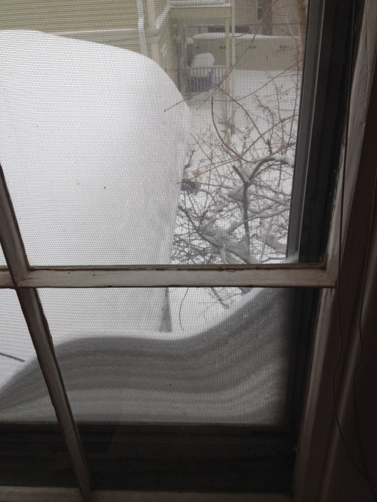 The view out my second-floor window.