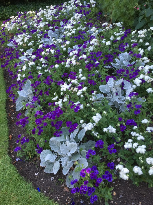 Flowers in the Clare gardens